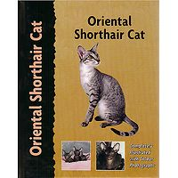 Oriental Shorthair Cat - Pet Love
